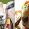 MRM Celebrates Bakr-Eid in Eco Friendly Manner