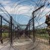 13 Nigerians Trying to Enter Bangladesh Through Indian State of Tripura, Caught
