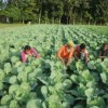 Chinese Technology to Help Bangladesh in Digitalizing its Agriculture Sector