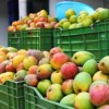Bangladesh Imposed Ban on the Exports of Vegetables and Fruits to the EU Market
